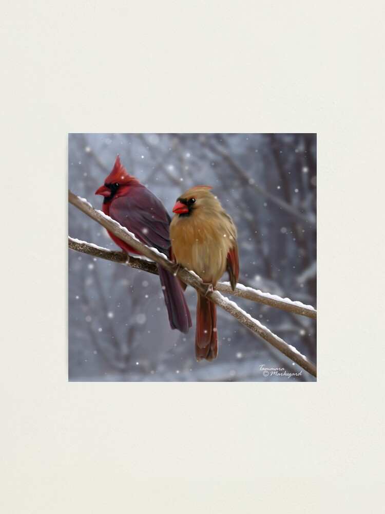Alternate view of Morning Song Photographic Print