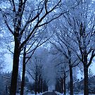 Street and Frozen Trees by ienemien