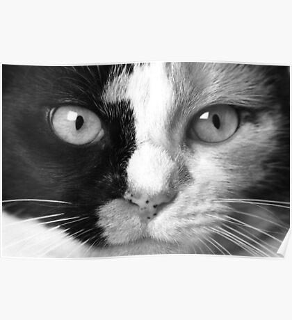 """Calico Eyes"" - Ying and Yang Cat Poster"
