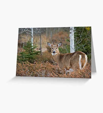 The Look Back Greeting Card