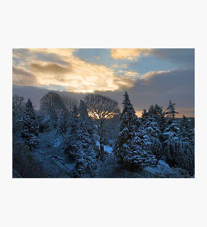 sunrise over snowy trees Photographic Print