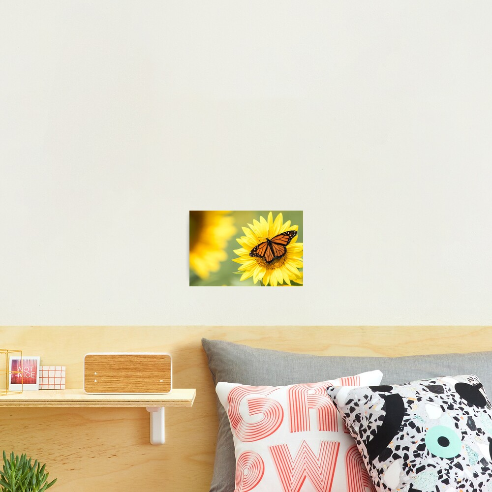 Monarch Butterfly on bright yellow sunflowers on a sunny summer morning Photographic Print