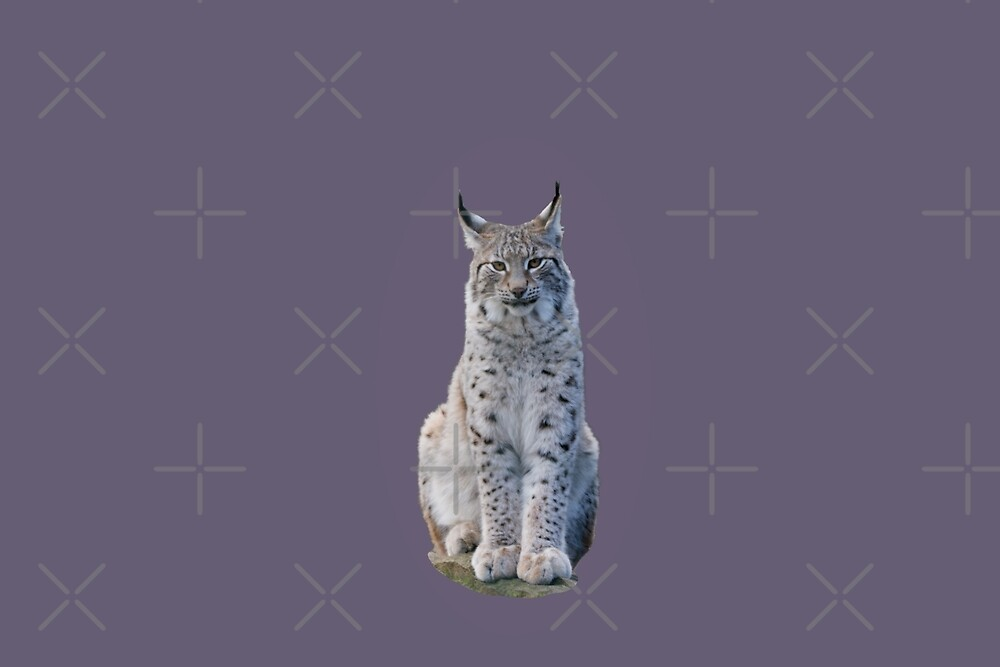 Look - the Lynx is watching you by SiobhanFraser