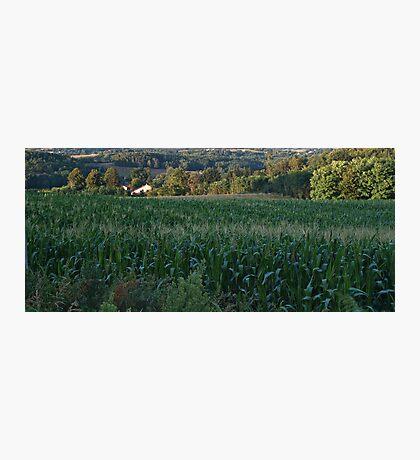 Cornfield Photographic Print