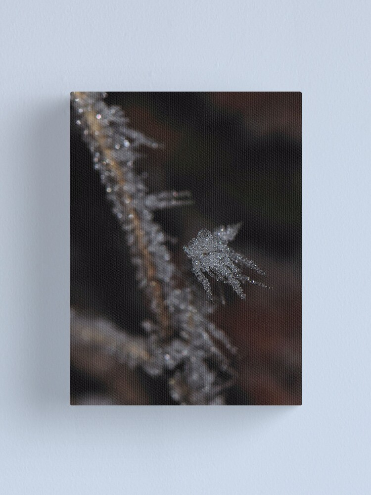 Alternate view of Frost #1 Canvas Print