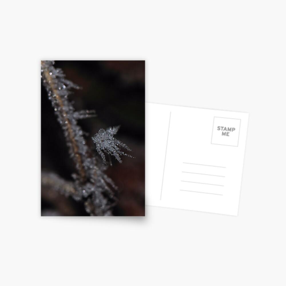 Frost #1 Postcard