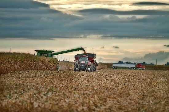 Harvesting on the Go by Steve Baird