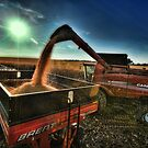 Golden Harvest by Steve Baird
