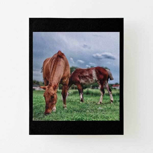 Grazing Canvas Mounted Print