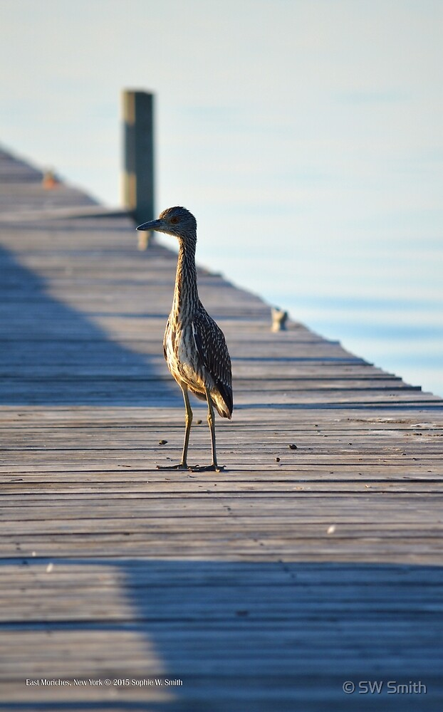 Wader | East Moriches, New York by © Sophie W. Smith