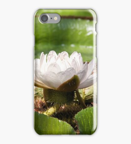 Amazonian Water Lily iPhone Case/Skin