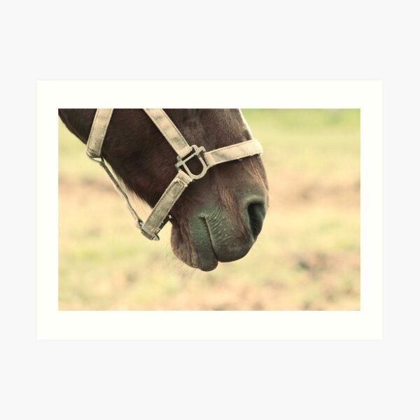 Bits and pieces - horse Art Print