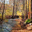Golden Woodland Stream, Ozark Mountains by NatureGreeting Cards ©ccwri