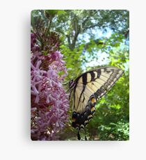 Tiger Swallowtail on Clerodendrom Canvas Print