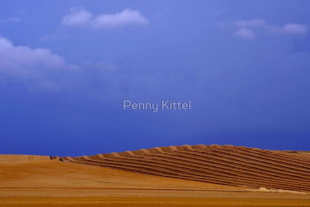 Country gold by Penny Kittel