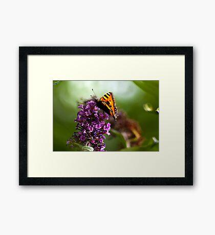 Butterfly #1 Framed Print