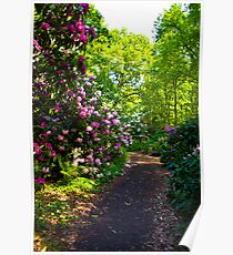 Flower Path Poster