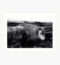 Welsh Mountain Pony Art Print