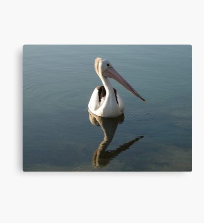 Spike the Pelican Canvas Print
