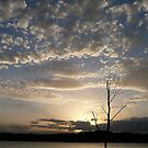 Twilight Display by aussiebushstick