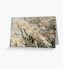 Light in the Willows Greeting Card
