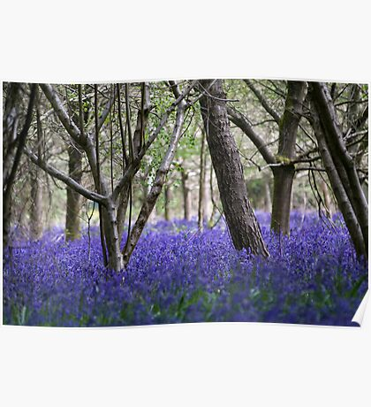 The Bluebell Wood Poster
