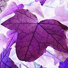 Photoshopped Leaf 1 by Yvonne Carsley