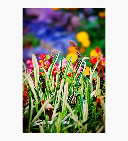 Colorful Grass Photographic Print