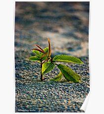 budding leaves Poster