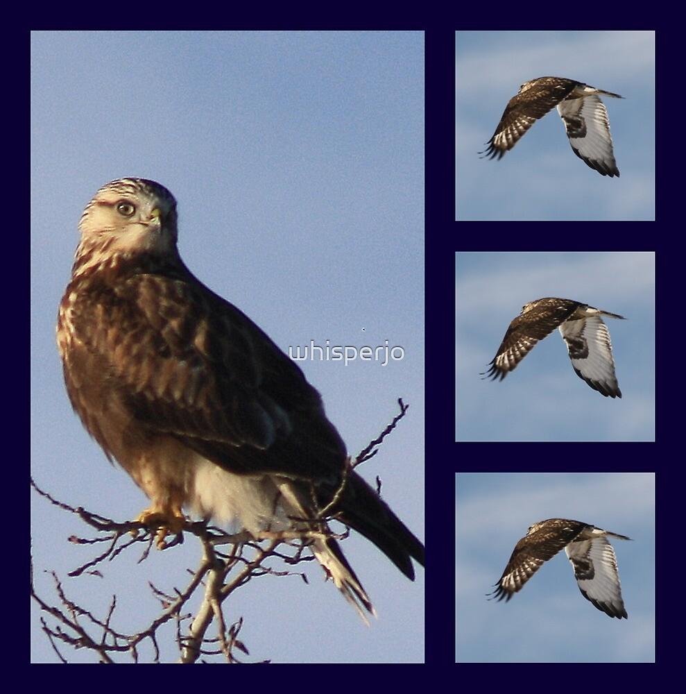 What bird am ? by whisperjo