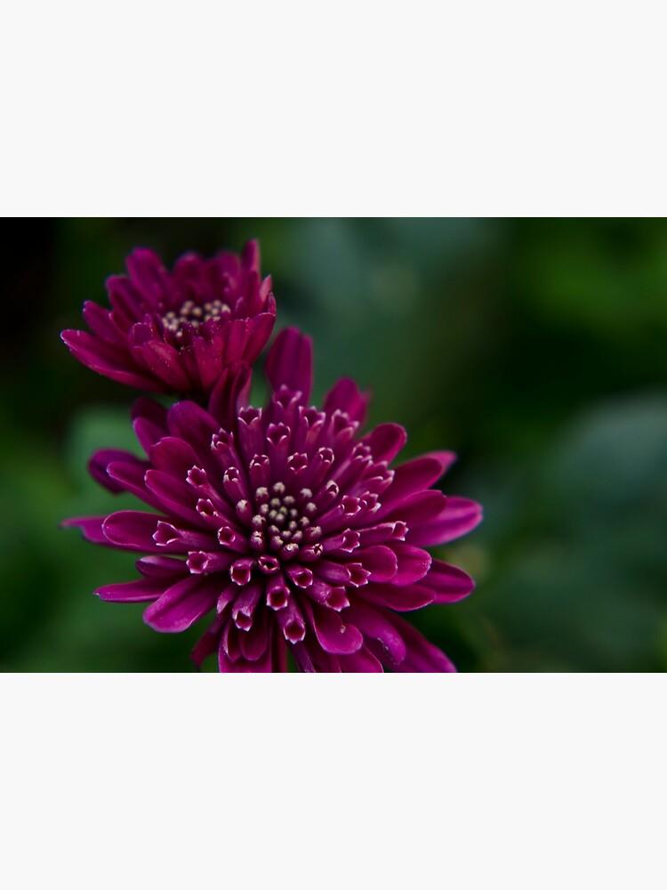 Floral composition by rapis60