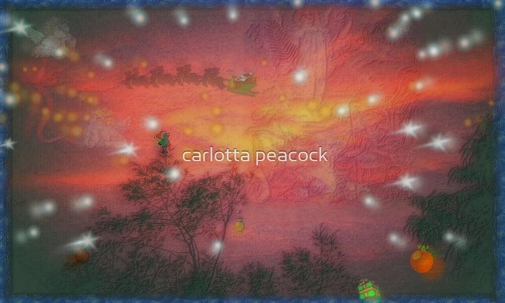 AN AUSSIE VISION by carlotta peacock
