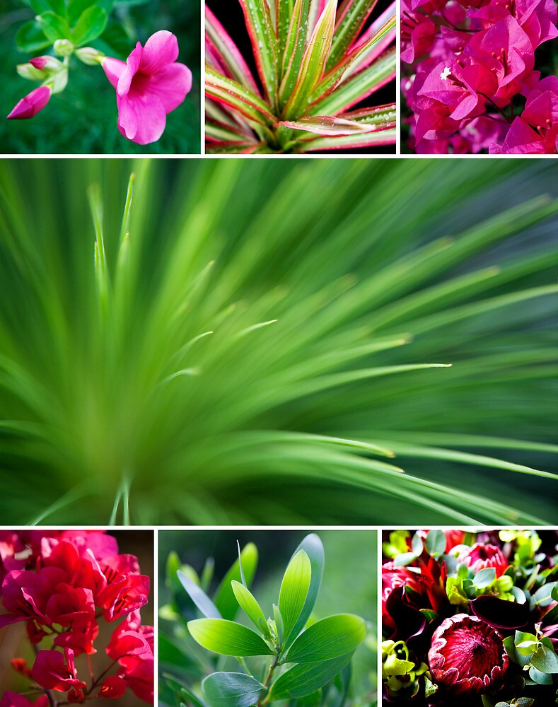 Flora Collage featuring Grass Tree by islandreflectns