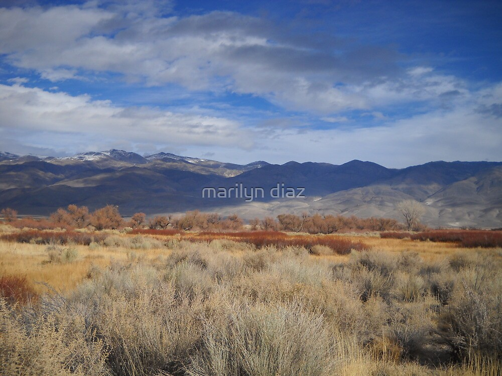 Desert Song by marilyn diaz