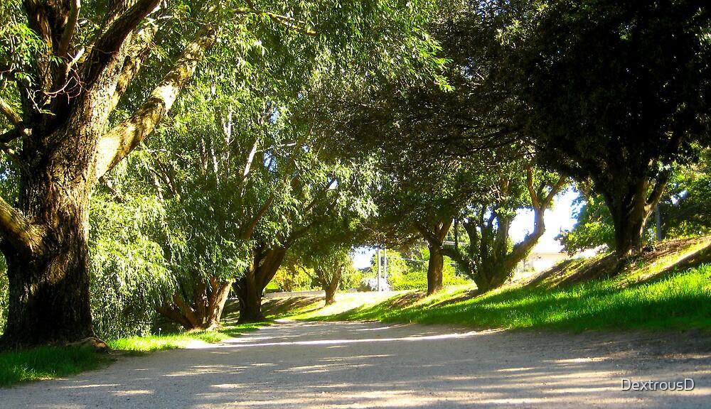 Ballarat Trees 2 by DextrousD