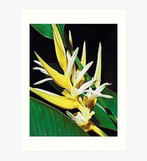 Tropical Exotica Art Print