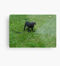 black lab puppy Metal Print
