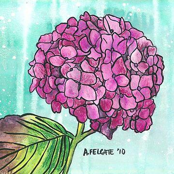 Hydrangea by aixie