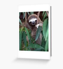 sloth greeting cards  redbubble, Birthday card