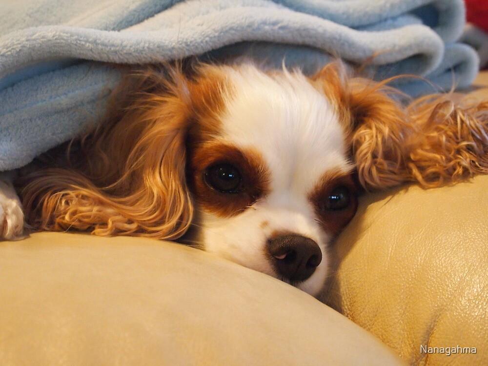 Molly, snuggling under a blanket by Nanagahma
