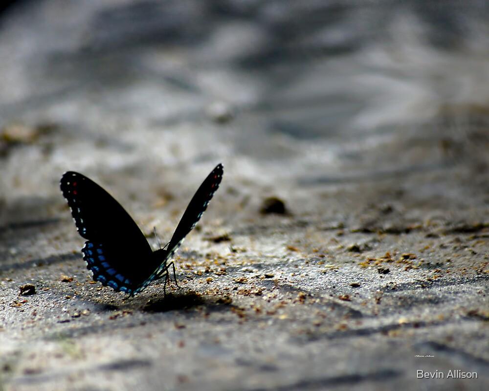 Butterfly - Ocala by Bevin Allison