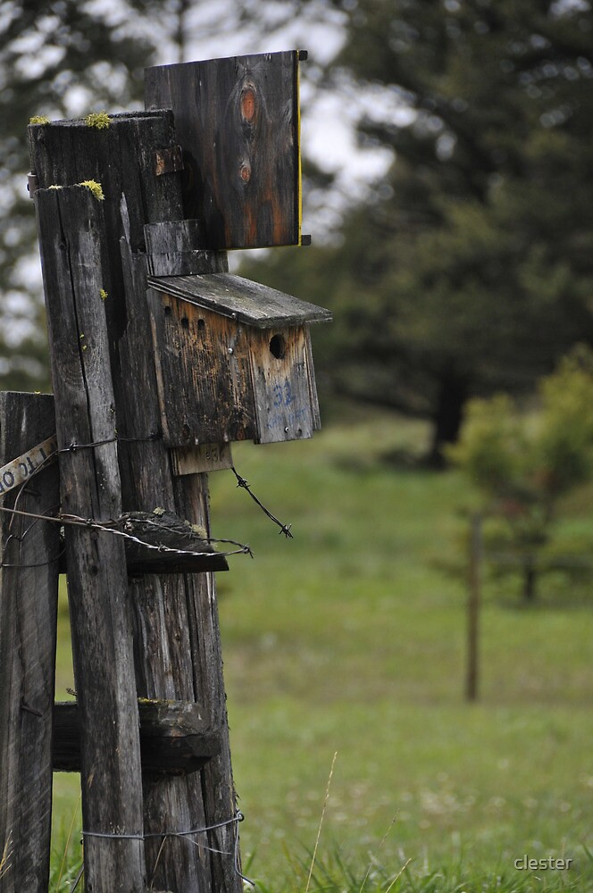 Bluebird Box by clester