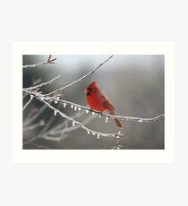 Cold Cardinal Art Print