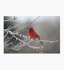 Cold Cardinal Photographic Print