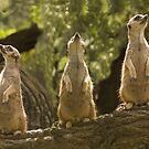 """""""Home Security System"""" - meerkats keep a lookout by ArtThatSmiles"""