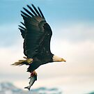"""Fish Fly"" - a bald eagle flying with fish by ArtThatSmiles"
