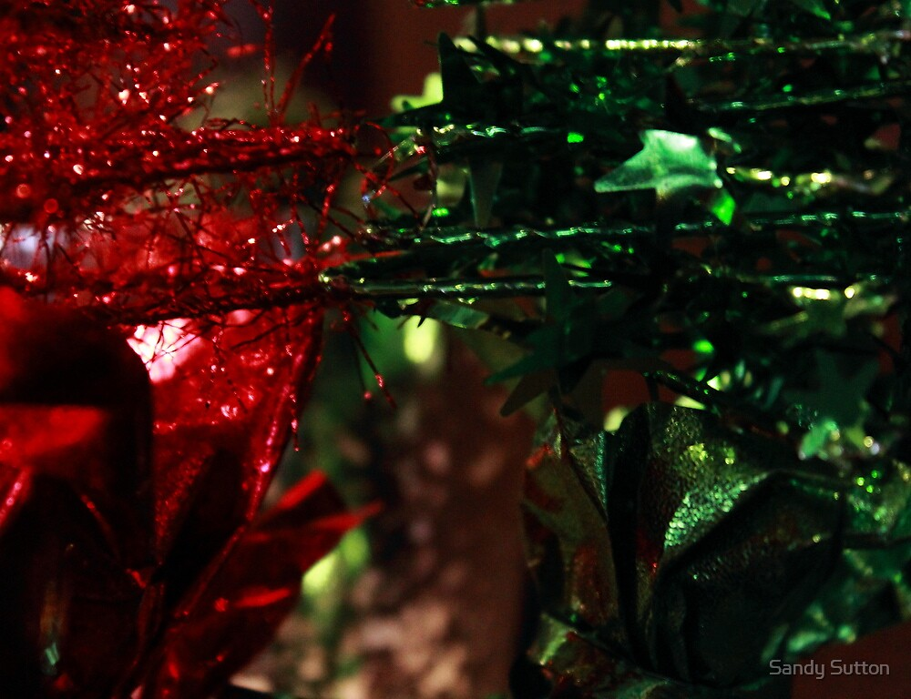 christmas contrast by Sandy Sutton