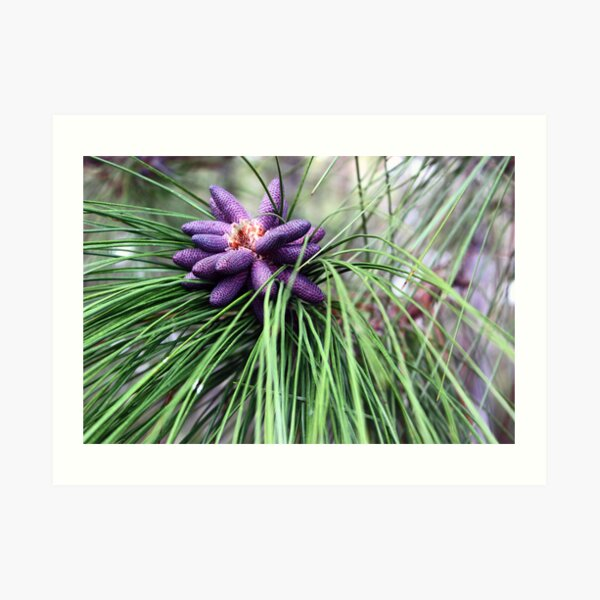 Purple and Green - Nature Photography Art Print