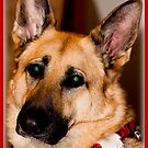In Loving Memory Of My German Shepherd - Bear by Melissa Seaback