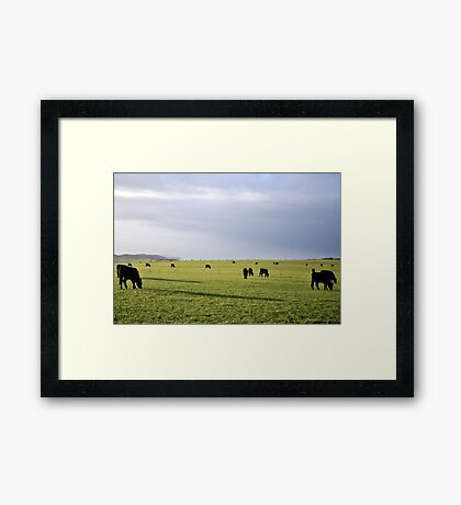 Early Morning Cows Framed Print
